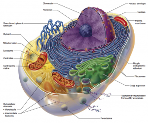 mitochondria dysfunction